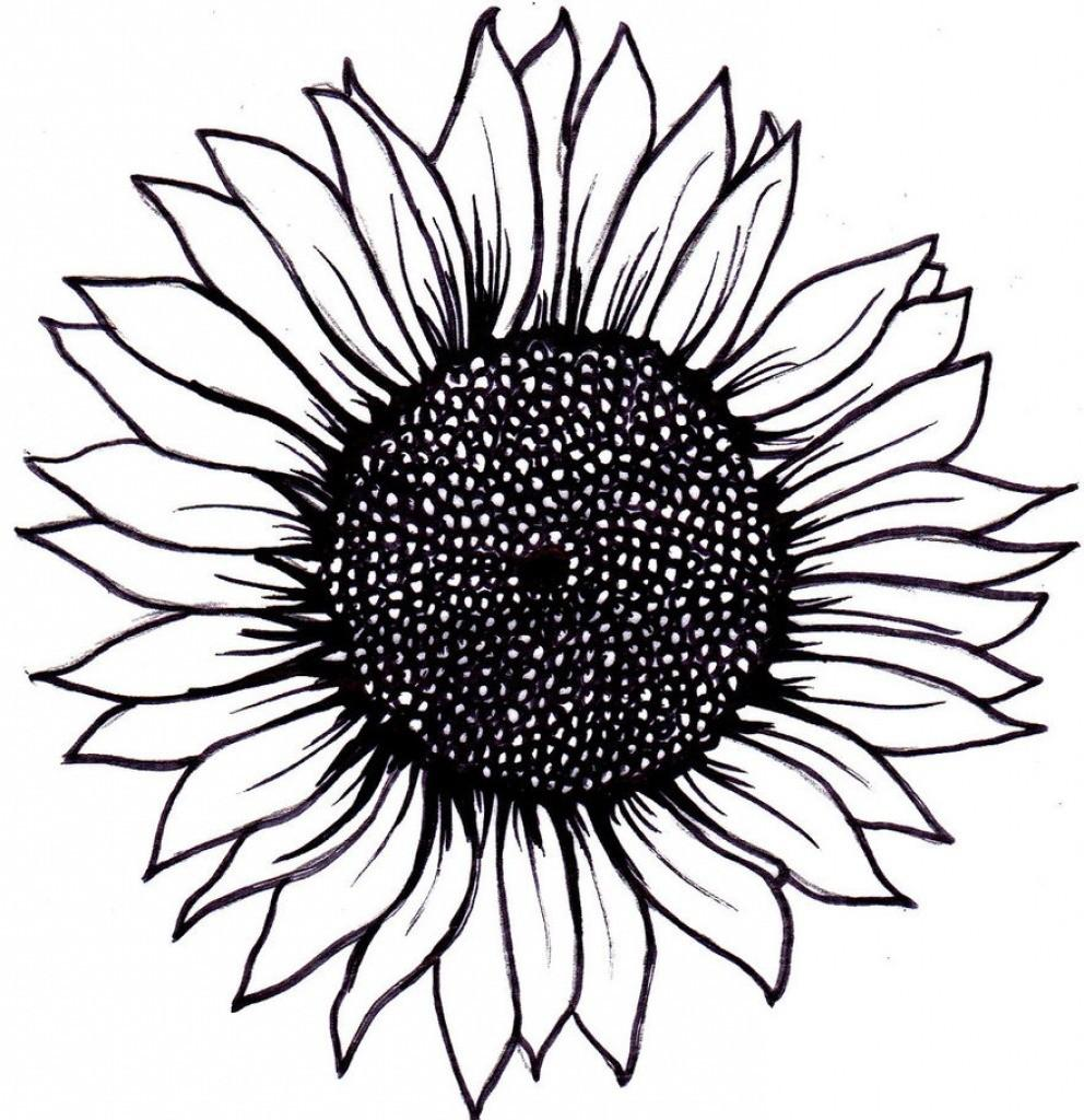 sunflower drawing 17