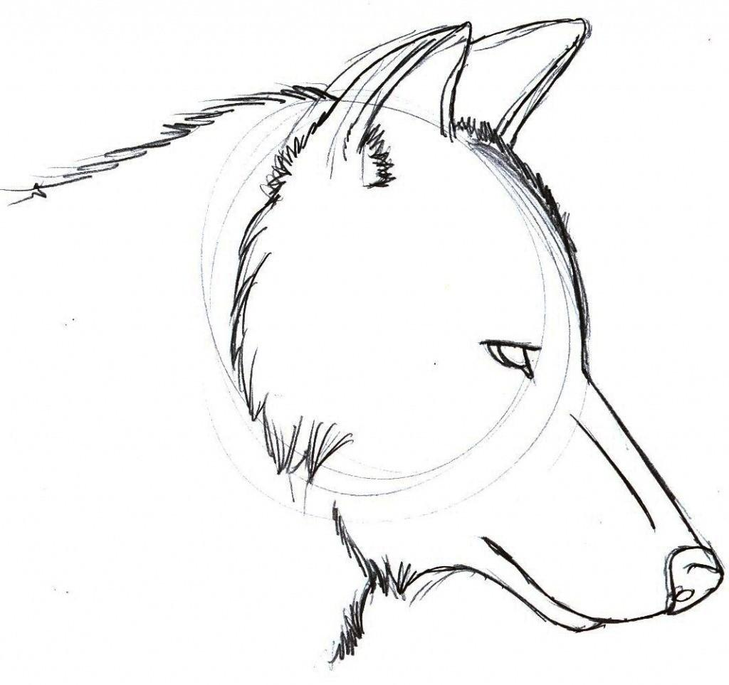 wolf drawing idea 4